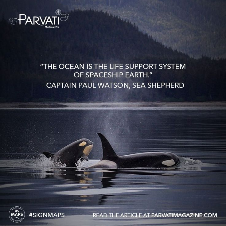 In an exclusive interview with Sea Shepherd's Captain Paul Watson, he tells us about his dedication to protecting marine mammals. Read on in Parvati Magazine for his heartfelt and inspiring answers to our questions!  The Arctic Ocean is one of the most pristine and vulnerable ecosystems. It is home to a wide range of marine life including several endangered species. It is also unprotected. If you haven't already, please sign the Marine Arctic Peace Sanctuary petition at parvati.org!