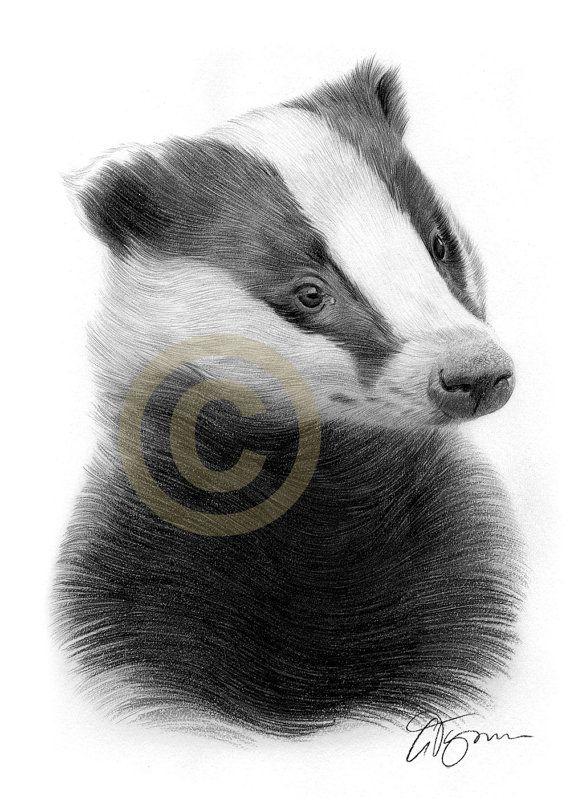 BADGER pencil drawing print  A4 size  artwork by GaryTymonArtwork