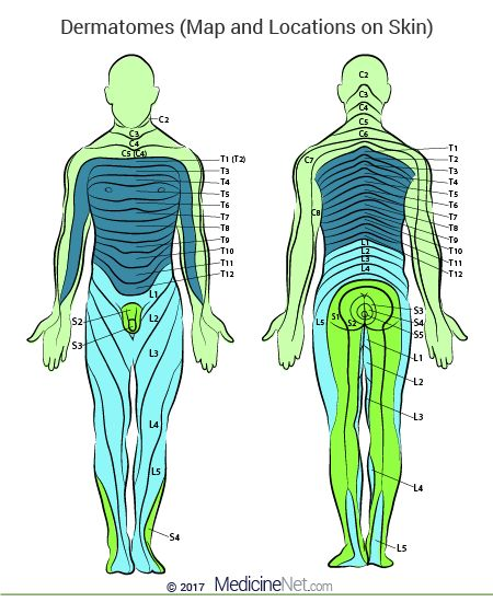 Spinal Dermatomes Chart: Map of Upper, Lower Body (Limbs, Head) #spine #dermatomes http://bahamas.remmont.com/spinal-dermatomes-chart-map-of-upper-lower-body-limbs-head-spine-dermatomes/  # What are dermatomes, and why are they important to our health? Patient Comment Read 1 Comment Share Your Story A dermatome is the area of the skin of the human anatomy that is mainly supplied by branches of a single spinal sensory nerve root. These spinal sensory nerves enter the nerve root at the spinal…