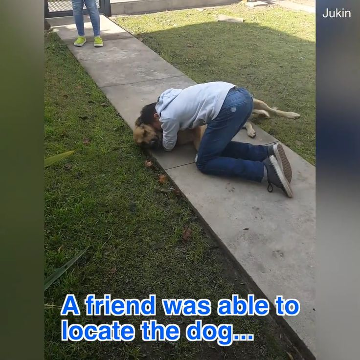 Reaction Of Boy When He Finds Back His Missing Dog…..