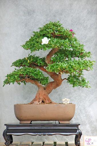 Varieties of Bonsai trees