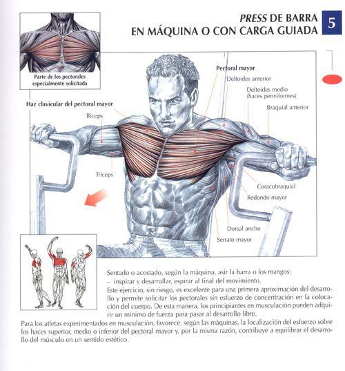 ejercicios pectorales - Buscar con Google