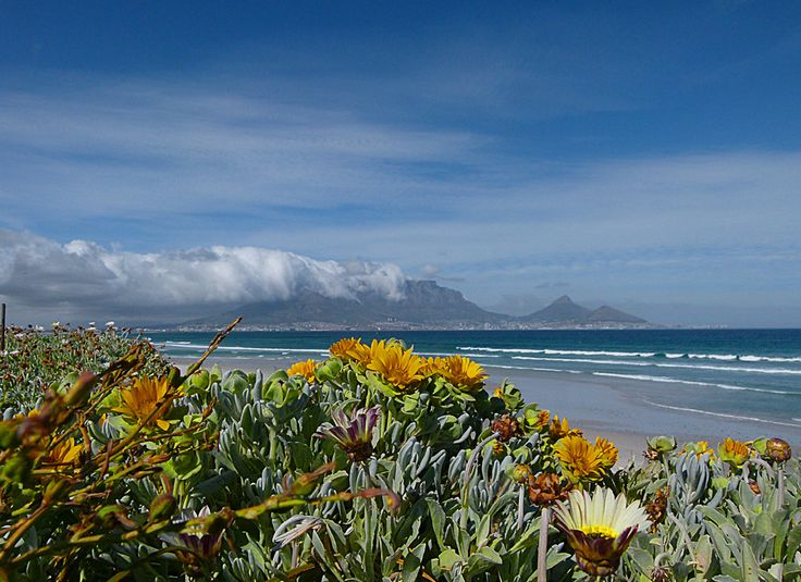#CapeTown. That's mountains, flowers, beaches and MUCH more ...