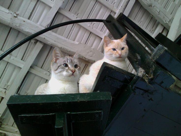 Mili y Yeti
