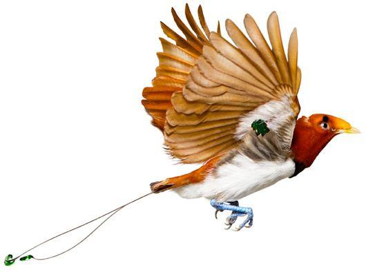 Andrew Zuckerman's birds