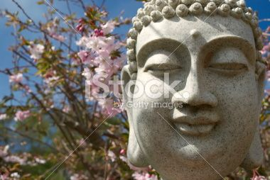 Buddha's Head with Wild Cherry Blossom Royalty Free Stock Photo