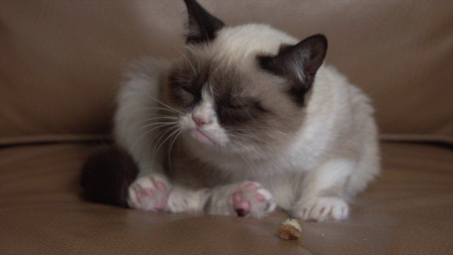 "{""Grumpy"" Cat video} be prepared to fall in love. #grumpycat.....LOLZ I'm already in love with cats."