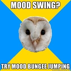 bipolar owl meme - Sök på Google