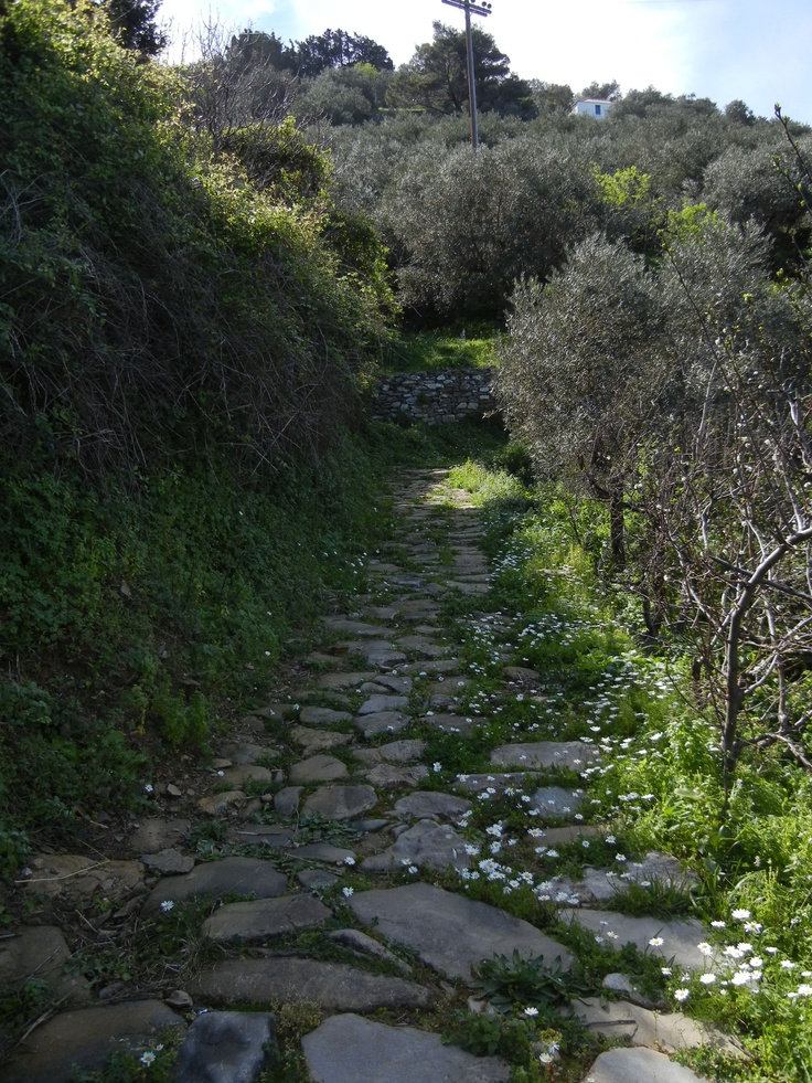 Path for the donkeys.