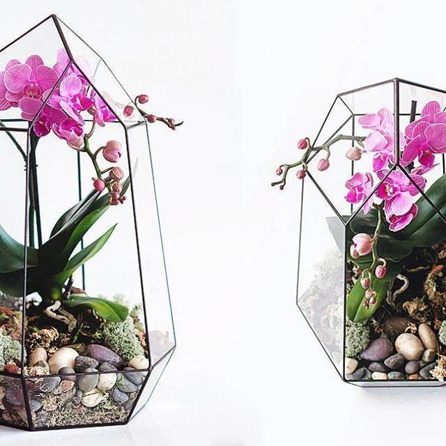 Orchids By Post Uk Orchids Orchids Pinterest Terrarium