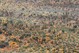 Image result for desert texture