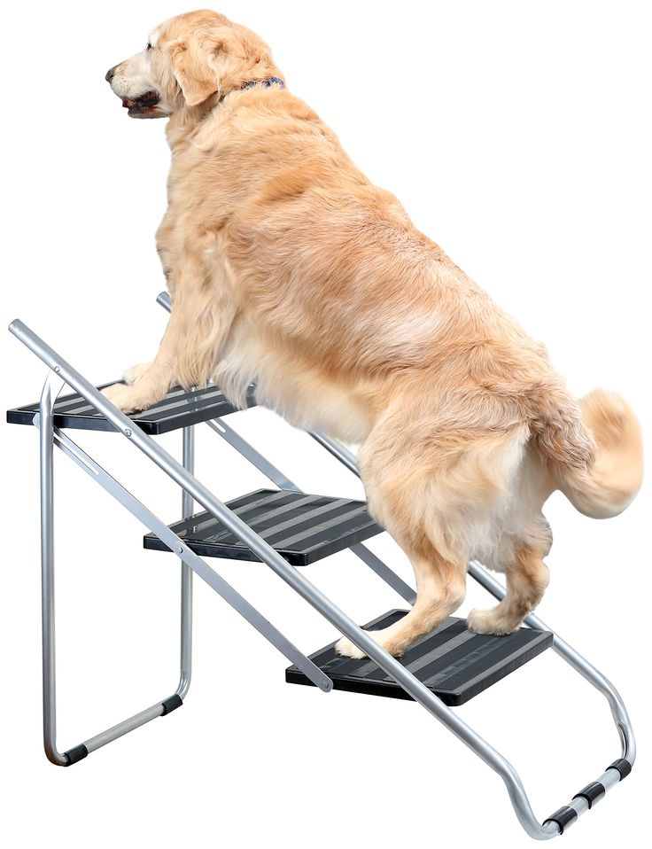 Etna Metal Folding Pet Steps