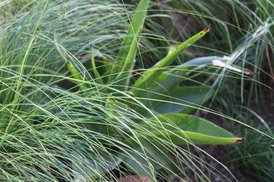 Natural Gardens | Emmarie Otto | Garden Elandsdrift