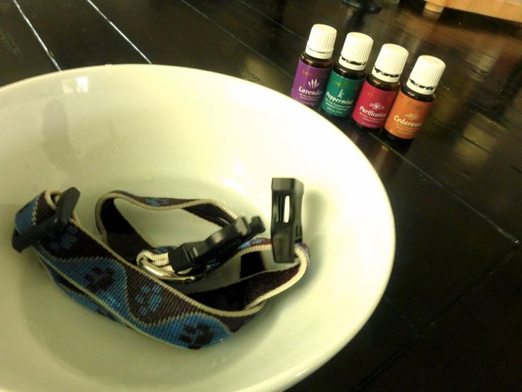 Flea and Allergy Collar for Dogs: ⅓ cup of purified water 2 drops of cedar wood 2 drops lavender 2 drops purification  2 drops peppermint