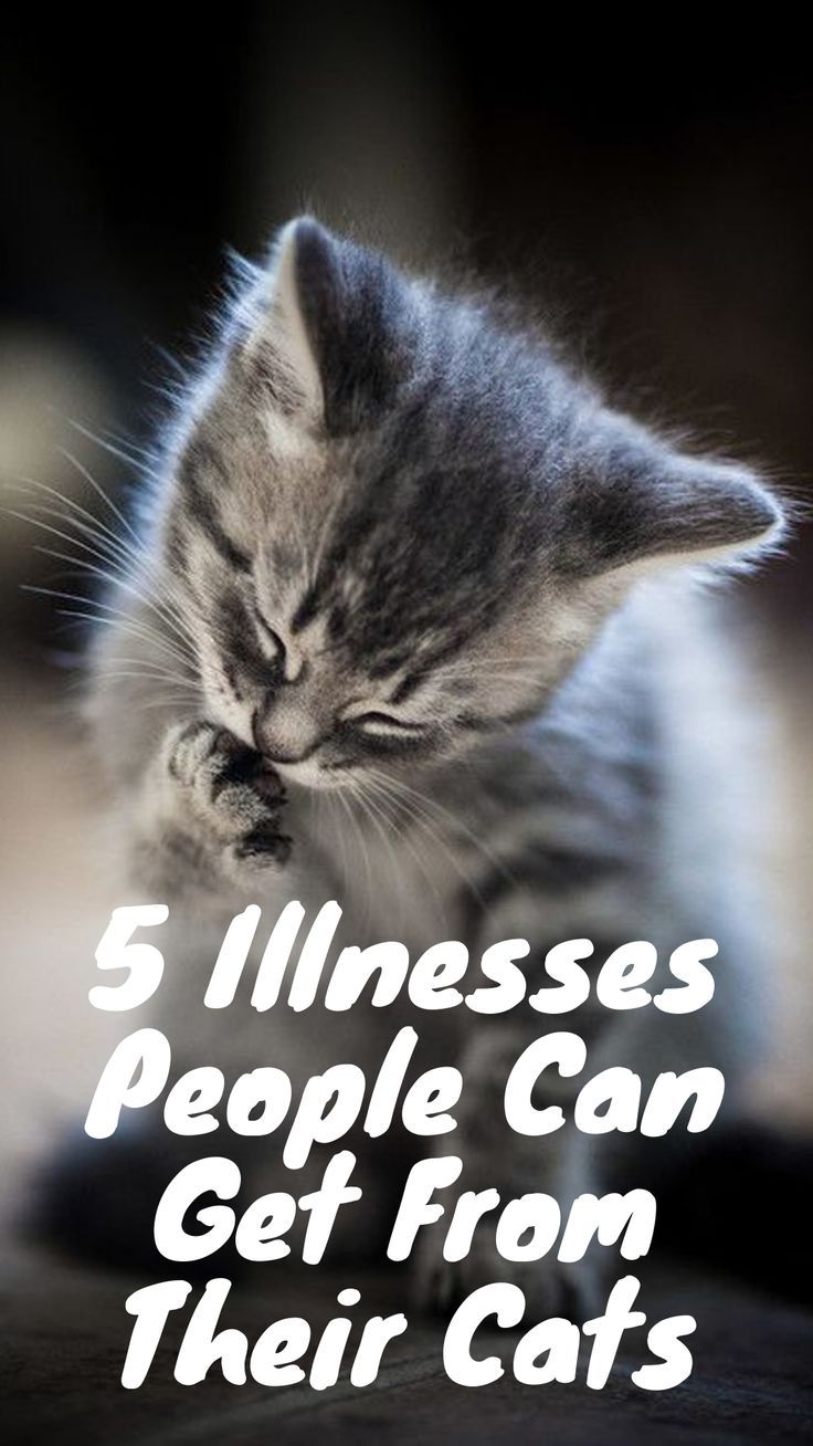 5 Illnesses People Can Get From Their Cats With Images Cat Life Cats Cat Illnesses