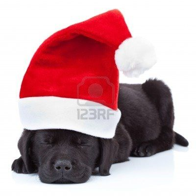 84 Best Christmas Pups