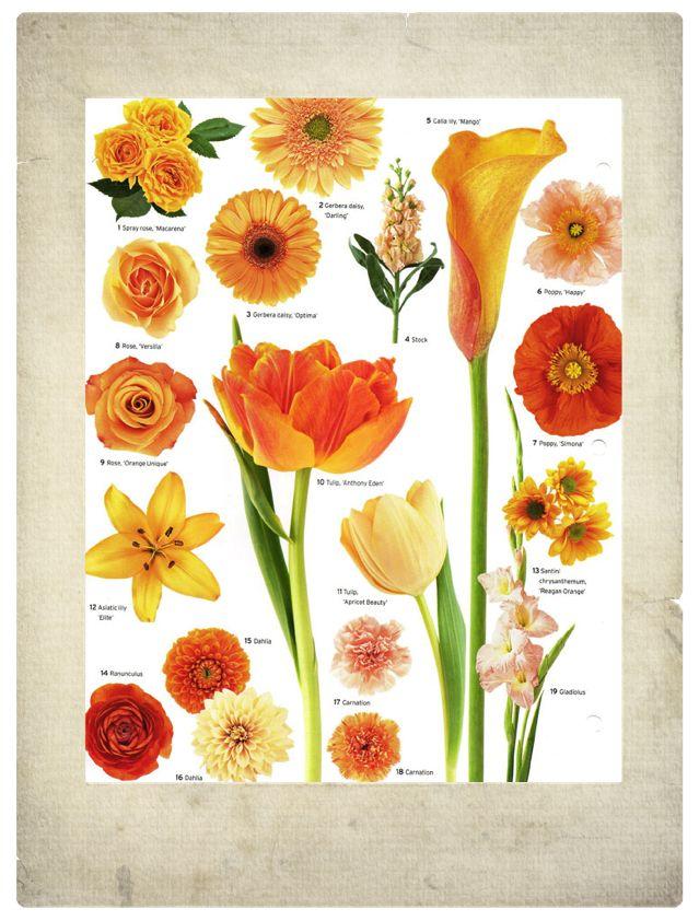 25 Best Ideas About Orange Flower Names On Pinterest