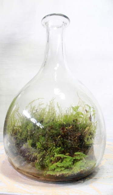 Start with an interesting container - add mosses, rocks, and have a living scene  - this is by the slug and the squirrel