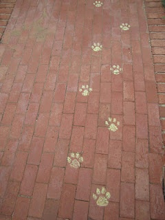 Chalk paw prints leading up to door -  Use washable paint, will last longer than chalk!