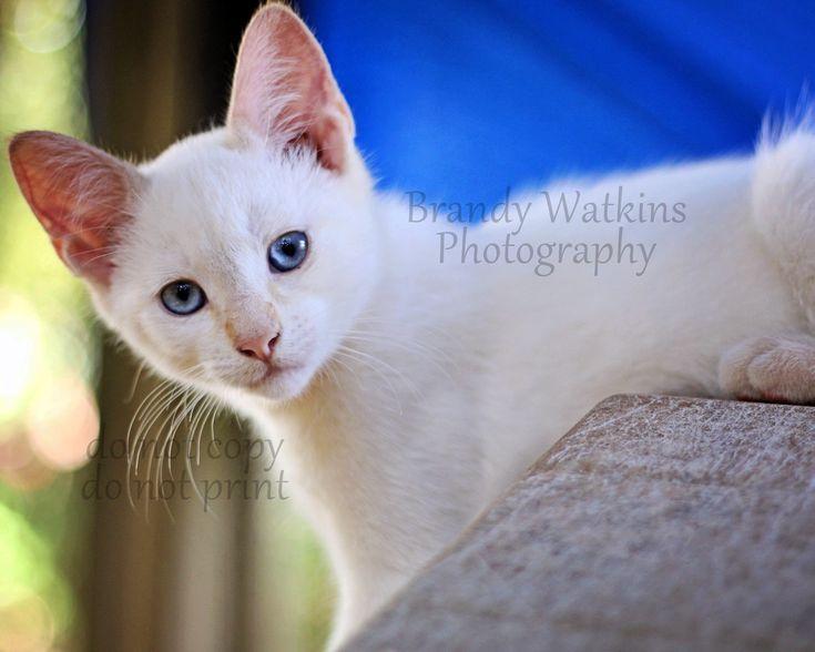 White Kittens Art White Kittens Weisse Katzchen Kunst Art De Chatons Blancs Arte De Gatitos Blancos White In 2020 White Kittens Vet Office Decor Cat Wall Art