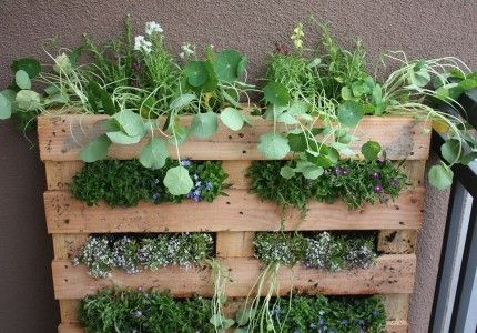 Vertical garden with palletteGardens Ideas, Pallets Gardens, Pallets Planters, Wooden Pallets, Vertical Gardens, Herbs Gardens, Wood Pallets, Old Pallets, Wall Gardens