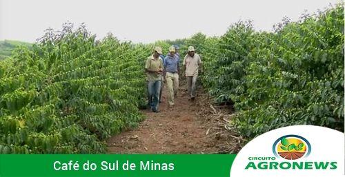 Governo federal vai destinar R$ 4,9 bilhões para o setor cafeeiro
