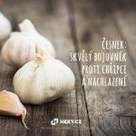 heky_cesnek