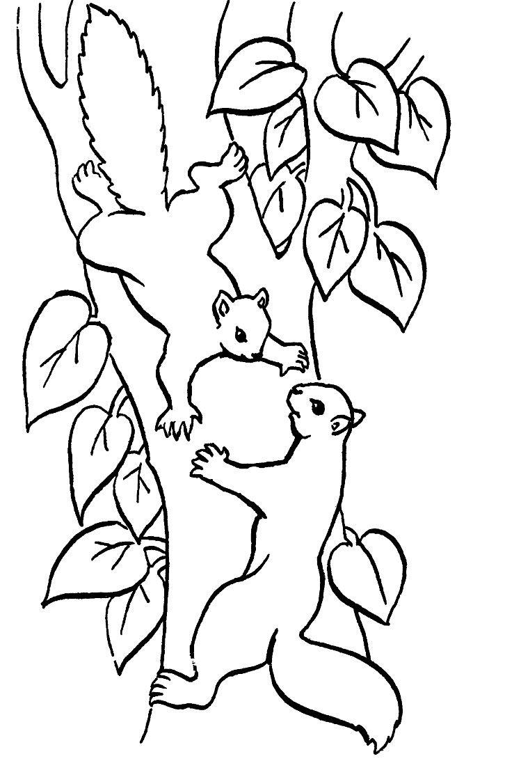 Coloriage écureuil  colorier Dessin  imprimer