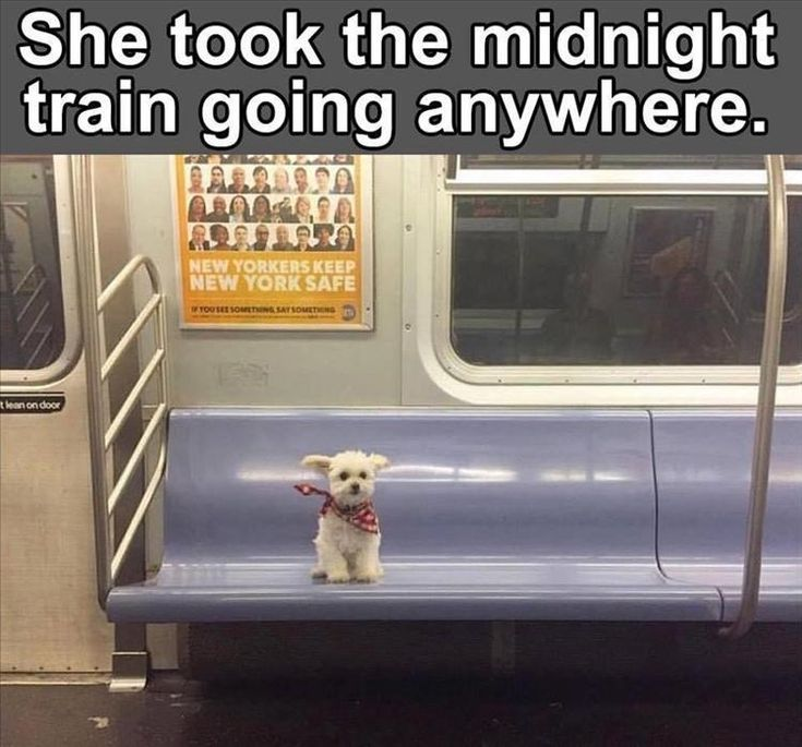 Going Anywhere