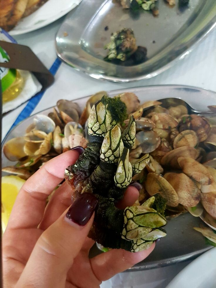 Percebes. Barnacles. Portuguese seafood. Looks like little dragons 🙈🙈🙈