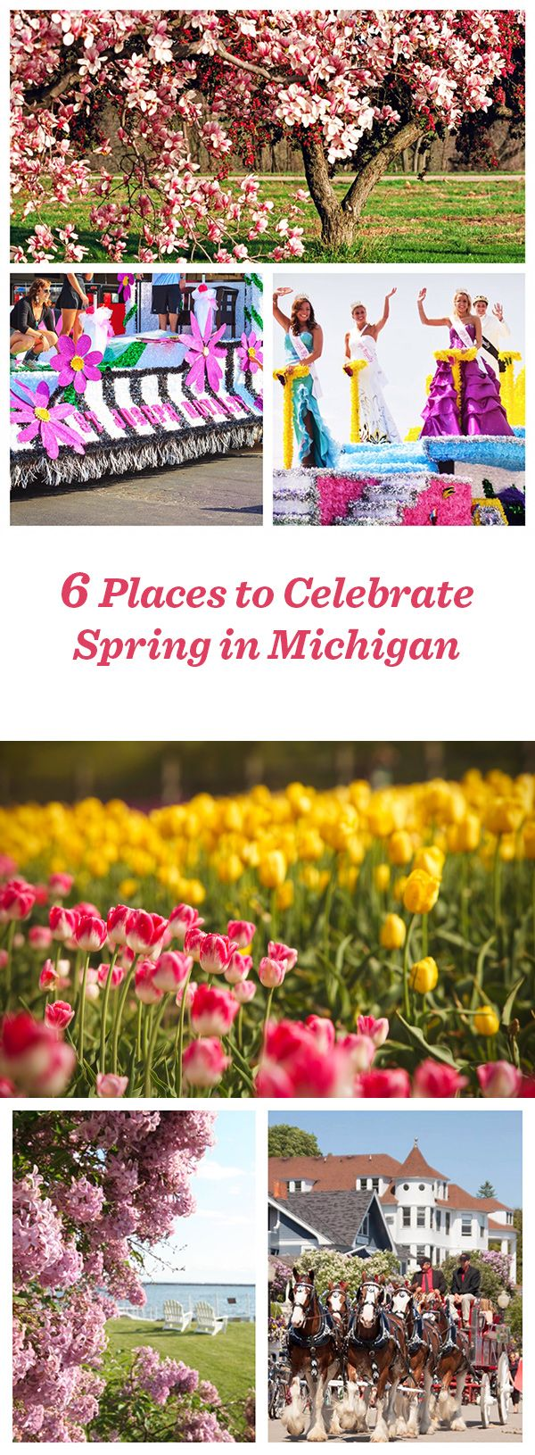 Holland, MI-Tulip Time Festival May 2-9. Mackinac Island- Lilac Festival starts June 5
