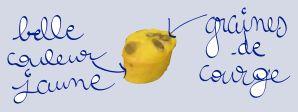 Ma recette fétiche du moment ou comment manger du potimarron autrement qu'en soupe ou en purée. C'est une recette douce et moelleuse grâce à la purée de potimarron et qui a une couleur jaune vif réconfortante en ces journées de fin d'automne où tout est...