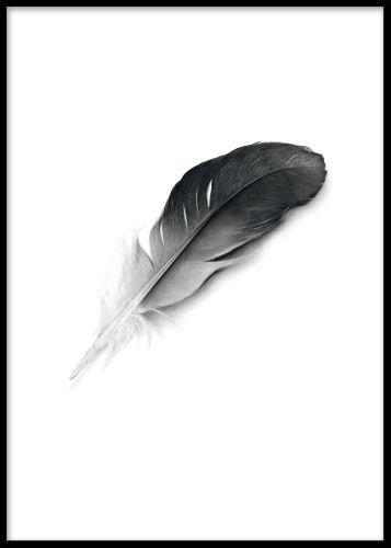 Black feather plakat. Poster med fjer. Poster med smuk sort-hvid fjer. Dette er en af vores mest populære plakater. Både fint på en hylde eller en billedvæg.