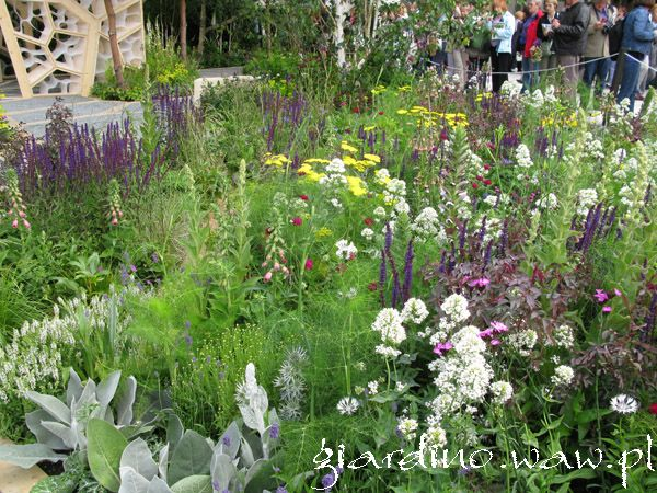 chelsea-flower-show-2011