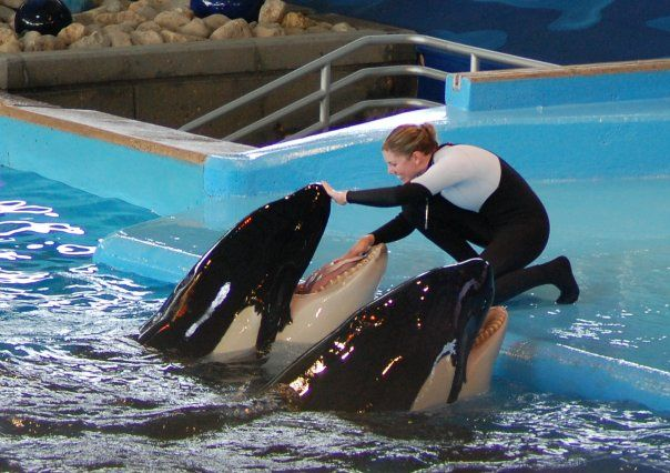 Sea World trainer Dawn Brancheau performs with orca Nalani in - marine mammal trainer sample resume