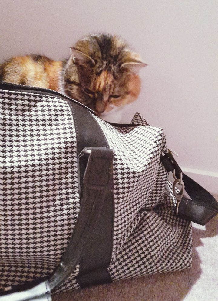 Shelly the Cat in a Citta Design Bag #travelbeautifully #redgiveaway