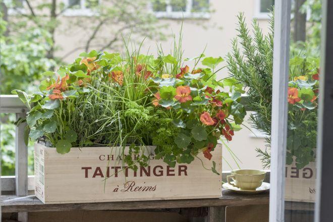 8 best Orto sul balcone images on Pinterest   Vegetable garden ...
