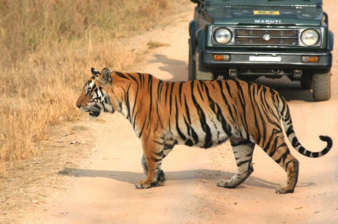 5-Hour Tiger Safari to Panna National Park from Khajuraho 									Explore the wilderness of the Panna National Park with your guide who will and lead you on your jungle safari, and tell you about the different types of plants and animals that inhabit the area. See the tigers and many others animals in there natural habitat while enjoying the forests majestic beauty. 		 		 														Start by being picked up from your hotel or the airport in Khajuraho. From there you are dr...