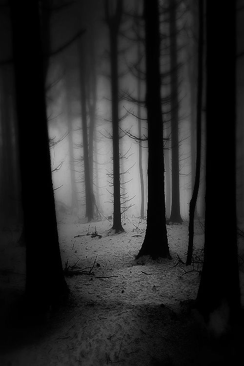 Forest Black and white BW B&W