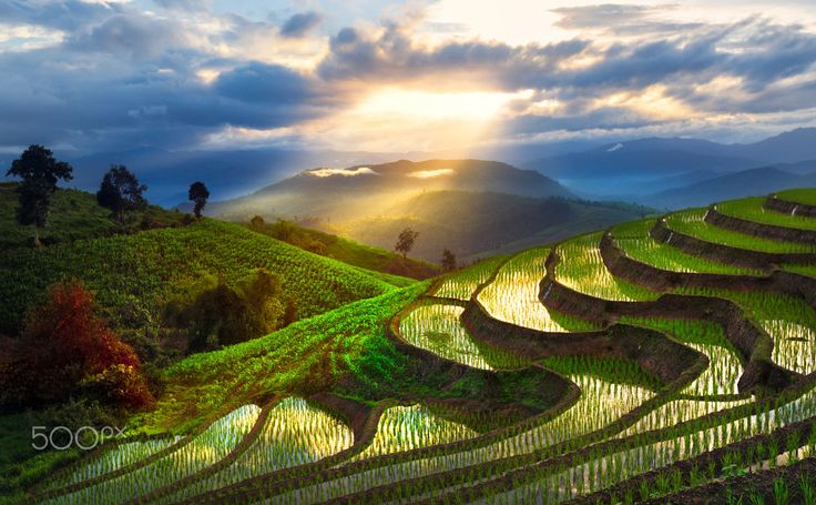 Beautiful Rice Field By Chatrawee Wiratgasem On 500px