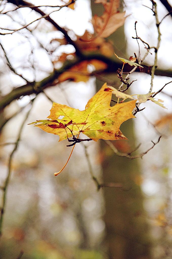 Blaadje, takjes, herfst