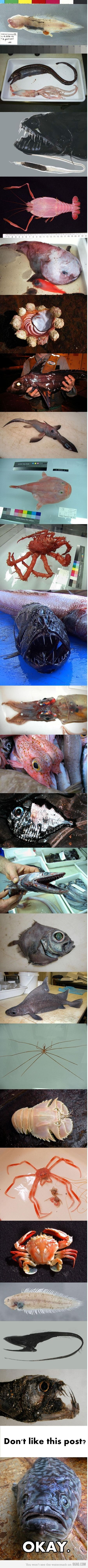 Some really weird and scary sea creatures - eeekkk!