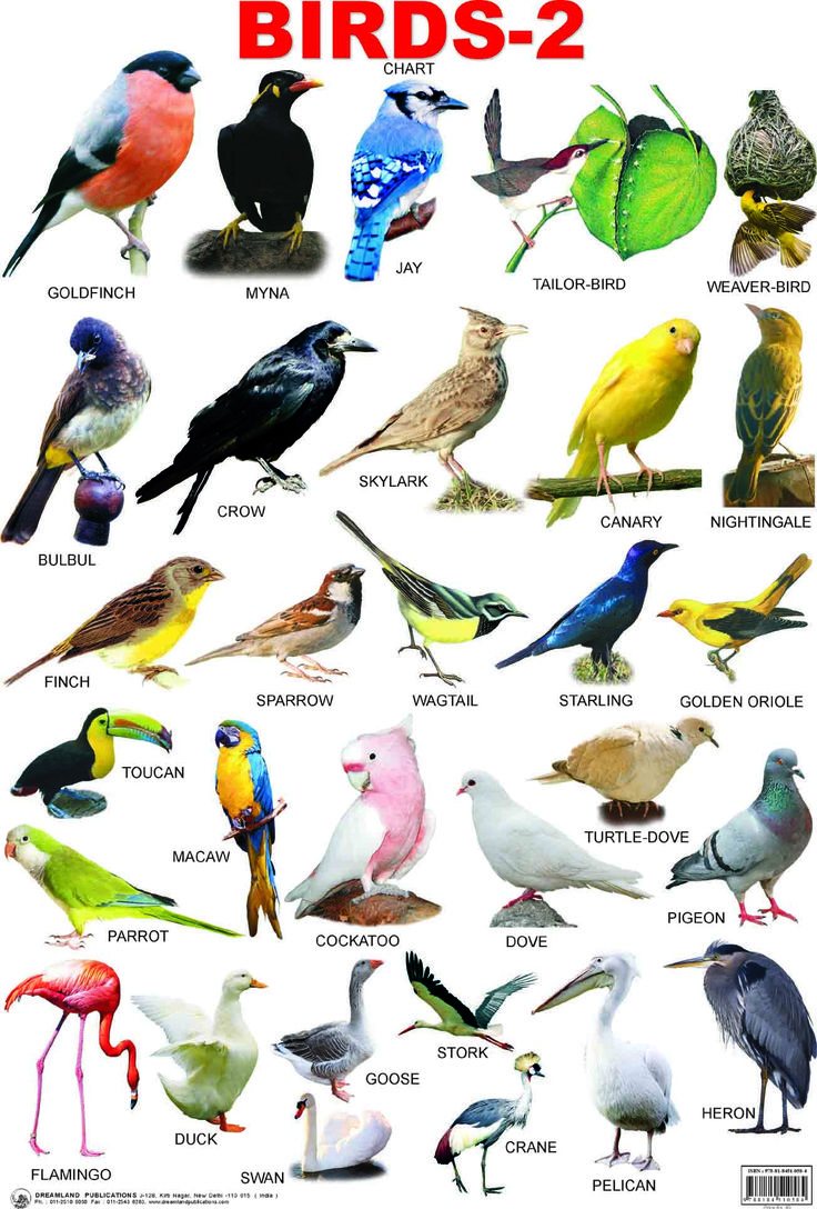 Foreign birds with name - photo#8
