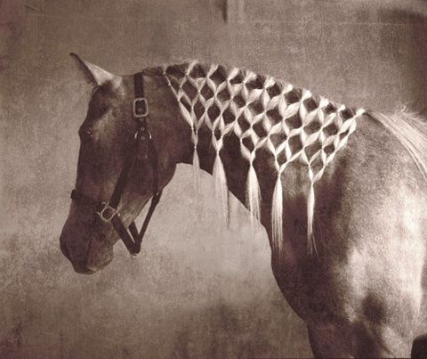 Someone macrame-d this horse...