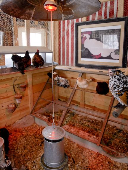 """Wow! What a chicken coop! """"I love the roosts, the heat lamp deflector, the """"feed-art"""" on the wall...."""""""