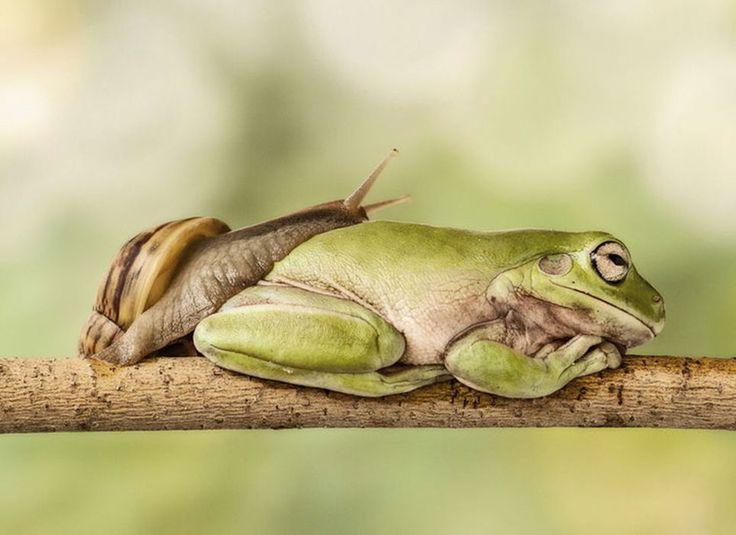 4.Kikkers leven van insecten, wormen, duizendpoten en naaktslakken. Dat voedsel is er niet. De kikkers verzamelen zich vaak in waterpoelen. Daar overwinteren ze op de bodem. Soms overwinteren kikkers ook in groepen op land.Hetzelfde geldt voor padden. Padden overwinteren meer op land dan in poelen. Salamanders houden meestal hun winterslaap op land onder hout of stenen. Maar het komt ook wel voor dat ze in het water overwinteren.
