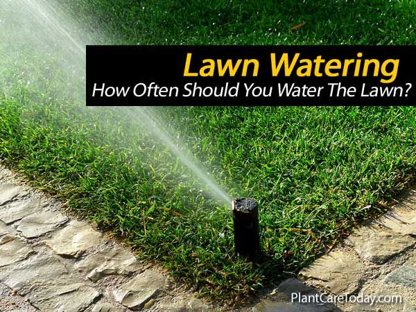 24 best images about lawn on pinterest - How often to water vegetable garden ...