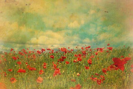 Campos de papoilas vermelhas com efeito grungy — Stock Photo © Julietart #12334847