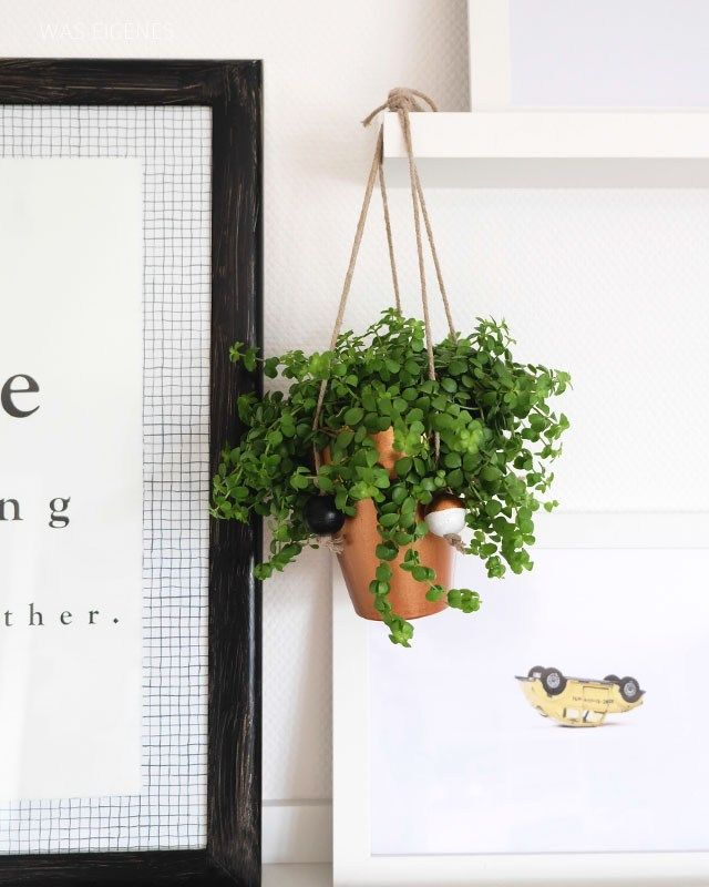die 25 besten h ngende pflanzen ideen auf pinterest makramee pflanzenschaukeln 7 klasse. Black Bedroom Furniture Sets. Home Design Ideas