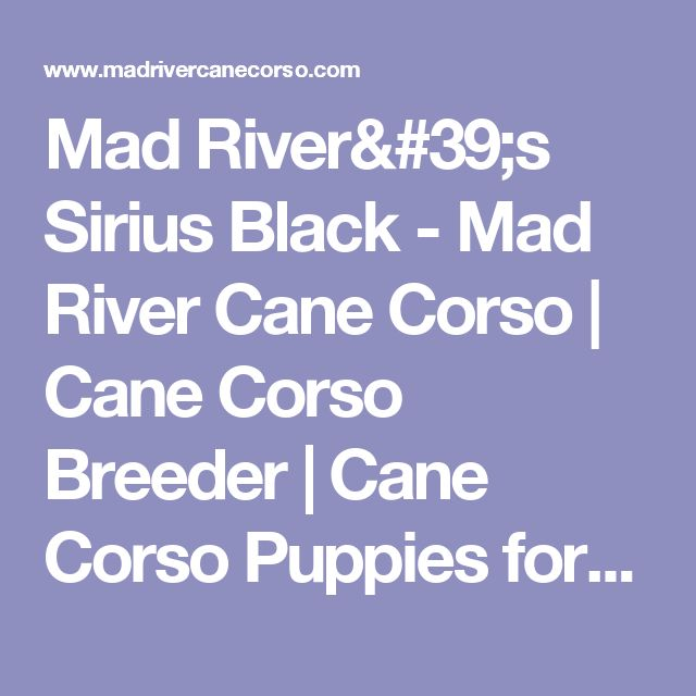 Mad River's Sirius Black - Mad River Cane Corso | Cane Corso Breeder | Cane Corso Puppies for Sale Mad River Cane Corso | Cane Corso Breeder | Cane Corso Puppies for Sale